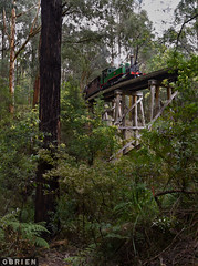 Bridge 8 (Dobpics O'Brien) Tags: 6a pbr puffingbilly puffing pbps pass billy bridge wright forest engine emerald gembrook narrow gauge na train locomotive rail railway railways victorian victoria vr steam
