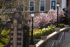 180426_4483_springstock148.JPG (greentufts) Tags: springstock springstock2018 flowers exterior lowercampus medfordsomerville mass unitedstates usa