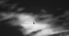 MINIMALISMO (Isai Hernandez) Tags: minimalismo blackandwhite photography photoshooting naturephotography bird sky line directions минимализм фотография чернобелый птица