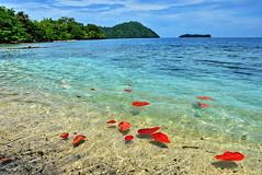 - (klaus53) Tags: pokpokisland bougainville papuanewguinea sea nikon