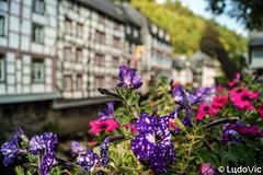 Monschau 2018 - 12 (Lцdо\/іс) Tags: montjoie allemagne deutschland décor flower fleurs juillet july 2018 city citytrip rhénanie westphalie eifel old medieval lцdоіс