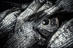CD_20180407-banc de poisson.jpg (clairedeprez-cd) Tags: noiretblanc blanc naturemorte nature animaux noir poisson bn bw black blackandwhite fish nb wb white