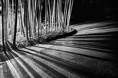 Can a barcode reader read this? (PeterThoeny) Tags: saratoga california siliconvalley sanfranciscobay sanfranciscobayarea southbay hakonegardens japanesegarden garden park bamboo bambooforest forest lines wood tree road light lightsandshadows shadow night monochrome blackandwhite sony a7 a7ii a7mii alpha7mii ilce7m2 fullframe vintagelens dreamlens canon50mmf095 canon 1xp raw photomatix hdr qualityhdr qualityhdrphotography fav200