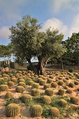 Los rincones de Montjuic (svet.llum) Tags: barcelona catalunya cataluña montjuic montjuïc montaña primavera paisaje paisatge cactus árbol ciudad naturaleza