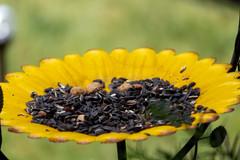 Waiting for a bird. (Tammy Strot) Tags: sunflower seeds birdseeds bird peanuts peanut sunflowerseeds sunflowerseed nature naturephotograohy outdoor outdoorphotography birdwatchers canon canonusa macro closeup