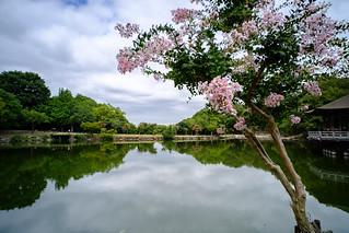UKIMIDO Pond