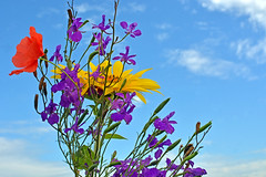 Flower Bouquet (misi212) Tags: flower bouquet