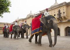 Amber Fort (Rolandito.) Tags: asia india inde jaipur amber fort amer elefant elephant decorated decoration elefanten elephants