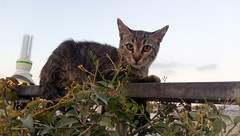 IMG_20180808_192530 (Aladdin Abu Taha) Tags: kitty قط قطصغير قطط cats cat