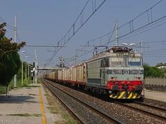 Tigre originale legnosa (nlovato96) Tags: e633 204 mir mercitalia rail livrea freight train timber treno merci legname guterzug old