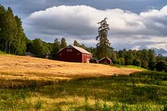 Norwegian Farm Estate (YogiMik) Tags: norwegian farm estate norway field trees blue sky houses building farmland clouds barley yogi mik landscape rural aoi elitegalleryaoi bestcapturesaoi