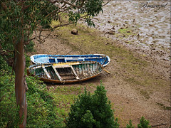 Descanso merecido (bruixazul poc a poc...) Tags: ria barcas arboles orilla sanvicentedelabarquera cantabria cara