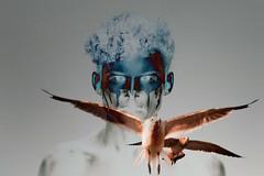Birds Portrait (https://tinyurl.com/jsebouvi) Tags: color oiseau birds vol fly wings face portrait dark sombre portraitwithbirds eyes decoration top photo wing flight nature seagull goeland beak doubleexposure
