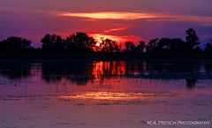 Sunset Splendor (mallanf61) Tags: lake light sunset sky reflection vibrant clouds cloudsstormssunsetssunrises