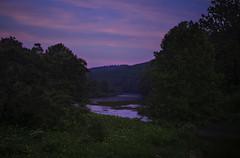 Nature's phenomenon (Matt Shiffler Photography) Tags: firefly fireflies synchronous chinese lantern chineselantern tionesta nationalgeographic planetearth allegheny alleghenynationalforest pennsylvania pa penn kellettville