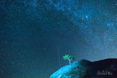 Meteor Falling Blue Starry Night (Striking Photography by Bo Insogna) Tags: perseidmeteor tree onetree singletree perseidmeteorshowers sky blue night stars astrophotography meteors nature lanscapes comet starry colorado rockymountains jamesinsogna photography unitedstates
