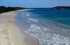 Les Salines (RarOiseau) Tags: martinique diapositivenumérisée 1986 mer plage