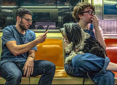 Another Shaggy Dog Story (J MERMEL) Tags: genres nyc people portraits subway cute dog iphonography