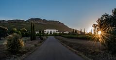 Anochece entre viñedos (antoniopérezsánchez) Tags: mérida extremadura bodegaviñasantamarina horaazul bluehour españa nikond5500 sunset anochecer antoniopérez vineyard