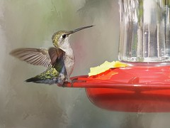 Birds - 2018 (Denise Trocio (D Trocio Photography)) Tags: backyardbirds backyard nature wildlife wings springtime spring summertime summer texturized