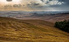 Textures and tones of Tuscany. (AlbOst) Tags: italy tuscany italianlandscapes cretesenesi siena rollinghills cypress wheatfields eveninglight textures tones landscapesseascapescityscapes greatphotographers