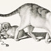Illustration of domestic cat and three playful kittens by Gottfried Mind (1768-1814). Original from Library of Congress. Digitally enhanced by rawpixel.
