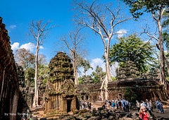 Travelers Viewing the Ta Prohm Temple, Cambodia-52a (Yasu Torigoe) Tags: sony a99ii a99m2 sonyilca99m2 siemreap siem reap angkor archeological archeology park history ancient architecture temple religion religious buddhism buddhist buddha historical ta prohm taprohm jungle trees tree tombraider banyan tomb crypt laracroft lara croft suryavarman vishnu stonework buildings surreal sculpture structure deityroots landscape overgrown vines art theravada photograph photography dynamic travel asia cambodia southeast deity ruins khmer roots
