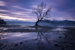 Survival (inkasinclair) Tags: wanaka tree lake reflection sunset long exposure water survival new zealand south island