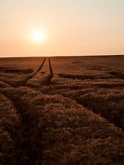 Feld (Elmar Egner) Tags: sony voigtländer 65mm makro apolanthar landscape sunset sun field shine romance