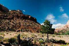 Zion 2018-079_ILCE-7RM3-34 mm-180529_180529-ILCE-7RM3-34 mm-161548__STA5253 (Staufhammer) Tags: sony sonya7riii a7riii sonyalpha sony1635mmf28gm sony1635mm sonygm sony85mmf18 zion nationalparks nationalpark zionnationalpark grandcanyon landscape alphashooters travel valley fire state park valleyoffire valleyoffirestatepark