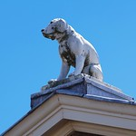 Dog on the roof thumbnail