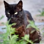 G#reato nuevo G#red #panteras #gatos #gatoscallejeros #cats #photocats #instacats #neko #meow #gatze #gatto #koshka #catsofworld #catsofinstagram #streetcats #chat #blackcat #gatonegro thumbnail