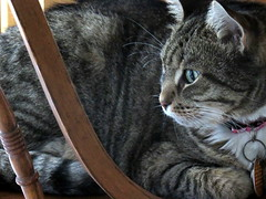 Just chillin' (heights.18145) Tags: cats mycats grey tabby kitties canon cute animals ccncby