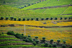 DOU_Quinta_de_Maraccos_view_07 (chiang_benjamin) Tags: dourovalley portugal vineyard port wine greenhill mountain