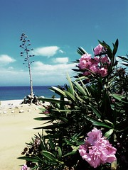 Endless summer II (Otherwise_m) Tags: beach mojacar almeria spain summer dessert pita sky skyline flowers nature natural sea sand photography photoshoot beautiful beachphotography