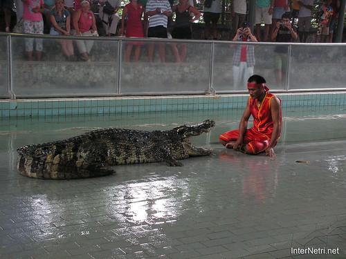 В пащу крокодилу Паттайя Таїланд Thailand InterNetri 18
