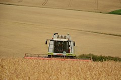 DSC_8093 (anetaležáková) Tags: summer sunset summerharvest sunnydays harvest agriculture agriphoto czechagri caseihpuma case casepuma165 caseoptum casepuma200 claas claaslexion newholland