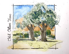 358-365 one drawing a day - Old Olive Trees- Portugal (www.doortje.nl) Tags: portugal olivetree old watercolour watercolor aquarelle aquarel pen ink tree olive boom bomen olijfboom olijfbomen onedrawingaday challenge doortjenl wwwdoortjenl wwwdroedelsnl www1tekeningperdagnl wwweentekeningperdagnl 365
