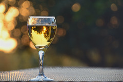 Golden days (JG - Instants of light) Tags: cup sunset macrophoto serenity endofday relaxing light dourados copo pôrdosol fotomacro serenidade fimdodia relaxante luz nikon d5500 sigma 18250