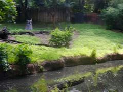 Harambe Wildlife Reserve (moacirdsp) Tags: harambe wildlife reserve kilimanjaro safaris africa disneys animal kingdom theme park walt disney world florida usa 2018