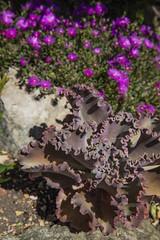 Jardin de FLOREAU Thierry (Pierre ESTEFFE Photo d'Art) Tags: jardin cactus plante cezy yonne89 france