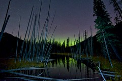 Night pond trees aurora (John Andersen (JPAndersen images)) Tags: alberta fall forest highway40 kananaskis lake moonless mountains night reflections