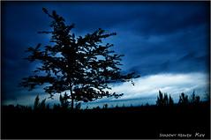 藍...II (SHADOWY HEAVEN Aya) Tags: 09081870a0006 風景写真 北海道 日本 ファインダー越しの私の世界 写真好きな人と繋がりたい 写真撮ってる人と繋がりたい 写真の奏でる私の世界 coregraphy japan hokkaido tokyocameraclub igers igersjp phosjapan picsjp 空 雲 outdoor landscape paysage cloud clouds sky sunset dusk tree trees blue