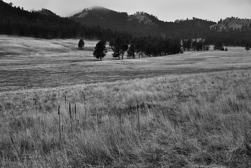 First Views Across the Prairie Landscape and Rolling Hills of Wind Cave National Park (Black & White)