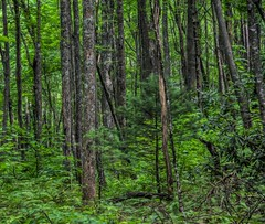 Into the forest (Steve4343) Tags: steve4343 nikon 7200 appalachian trail cherokee national forest red green blue yellow orange white clouds sky beautiful tennessee autumn beauty johnson county lake watauga cloud colorful woods garden gardens happy leaves rocks wildlife landscape mountain tree trees grass water wood butler summer spring macro flower flowers at carter usa