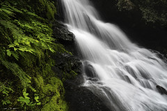 Watercourse in Flight (courtney_meier) Tags: britishcolumbia canada pacificnorthwest provincialpark skagitvalley ferns flow forest handheld longexposure moss water waterfall