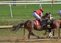 "2018-08-04 (24) r9 Weston Hamilton on #1 Shecor (JLeeFleenor) Tags: photos photography md maryland marylandracing marylandhorseracing laurelpark jockey جُوكِي ""赛马骑师"" jinete ""競馬騎手"" dżokej jocheu คนขี่ม้าแข่ง jóquei žokej kilparatsastaja rennreiter fantino ""경마 기수"" жокей jokey người horses thoroughbreds equine equestrian cheval cavalo cavallo cavall caballo pferd paard perd hevonen hest hestur cal kon konj beygir capall ceffyl cuddy yarraman faras alogo soos kuda uma pfeerd koin حصان кон 马 häst άλογο סוס घोड़ा 馬 koń лошадь outside outdoors"