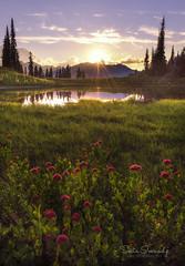 Sunset at the Lake. (Mt Rainier NP, Chinook Pass, WA). (Sveta Imnadze) Tags: nature sunset clouds wildflowers tipsoolake mtrainiernp wa chinookpass