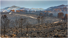 wildfire (Mick Hadley) Tags: ash burnt dawn fire hills llutxent morning mountains pine pinet rock stormy sunrise trees wildfire forest forestry valencia spain nikon d7200