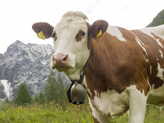 P6230079 (turbok) Tags: berge landschaft putzenalm sölktal c kurt krimberger